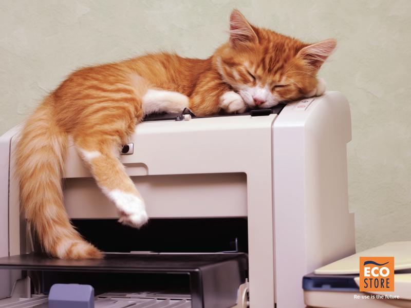 gatto rosso addormentato su una stampante