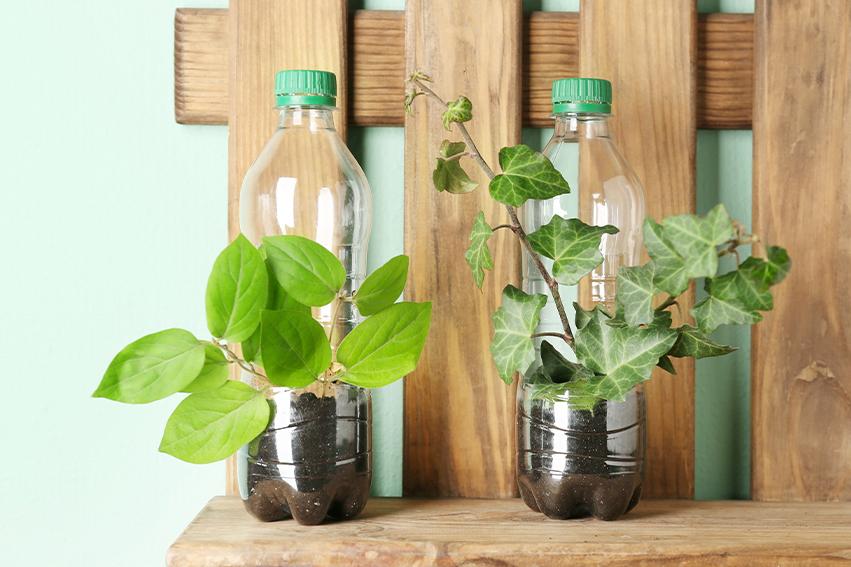 Bottiglie di plastica come vasi per piantine
